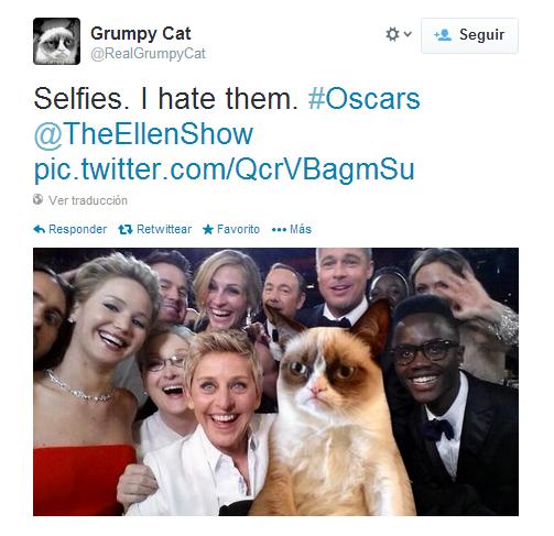 'Selfie' cat